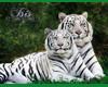 Bengal Tigers ~Isis~