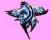 the glaucus atlanticus