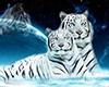 White Tiger open shirt
