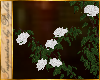 I~Rose Vine*White