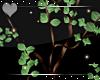 Oasis -Wild Tree