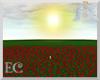EC| Red Rose Field