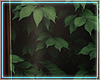 ○ Tropical Frame I