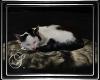 (SL) Sleeping Kitty