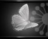 floatting butterfly