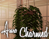Charmed Hanging Plant