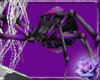 (C) Sin's spider