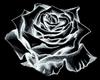 Tattoo Rose/W