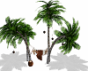Beach Palms Hammock