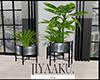 Home plants trio