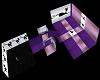 purple cat club