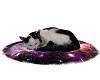 Tara, Sleeping Cat <3