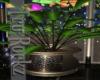 :M::Aquarius Plant