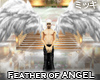 ! White Feather of Angel