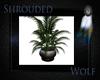 ~Plant~