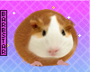 ly Hamster FOFO TOP
