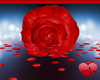 Mm Rose Life