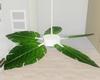 :3 White Ceiling Fan