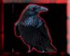 {DL} Dark Raven