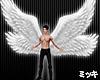 Angel Wings Animated
