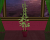Plant Weed Pot