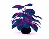 Blue/pink plant