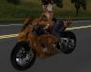 Shadow Custom Bike