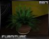 (m)Hindi Planter