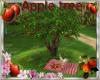 Apple tree Normandy
