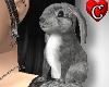 CC Bunny gray Pet