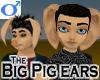 Big Pig Ears -Male