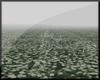 Misty field of flowers