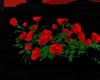 !A  rosebush II