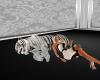 tiger sleep