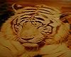 tiger streaming radio