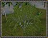 ⚡ Tropical Plant V7