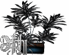 50 shade plant
