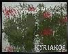 -K- Water Grass Reflect