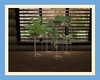 !D! CDC Indoor Plants