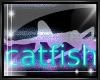 [SIN]~ Catfish Shirt M 2