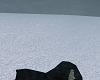 CSS| Snowy