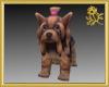 Yorkie Puppy Pet