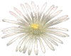 Cactus Flower