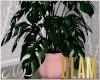 GLAM Plant 1