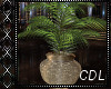 !C* Chillout Plant