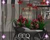 [CCQ]NC:Cafe Deco