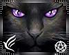 Wicca Kitty Frame v3