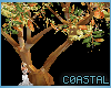 crepe myrtle tree w/pose