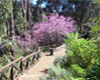 Araluen Blossom Path TALL