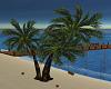 Coconut Tree Anim,